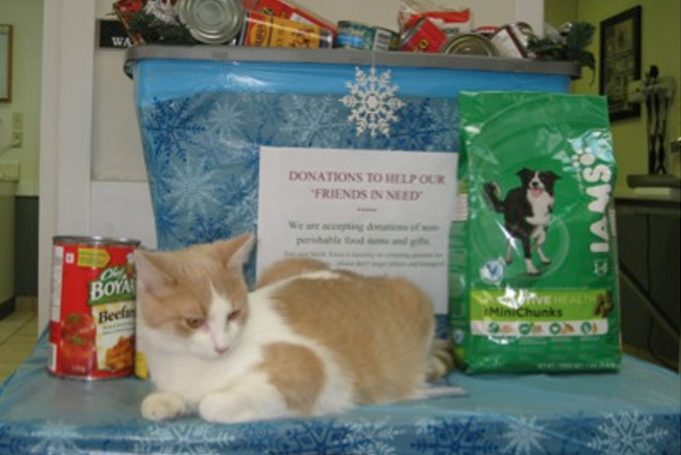 Cat in front of donation items