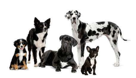 Dogs against a white background