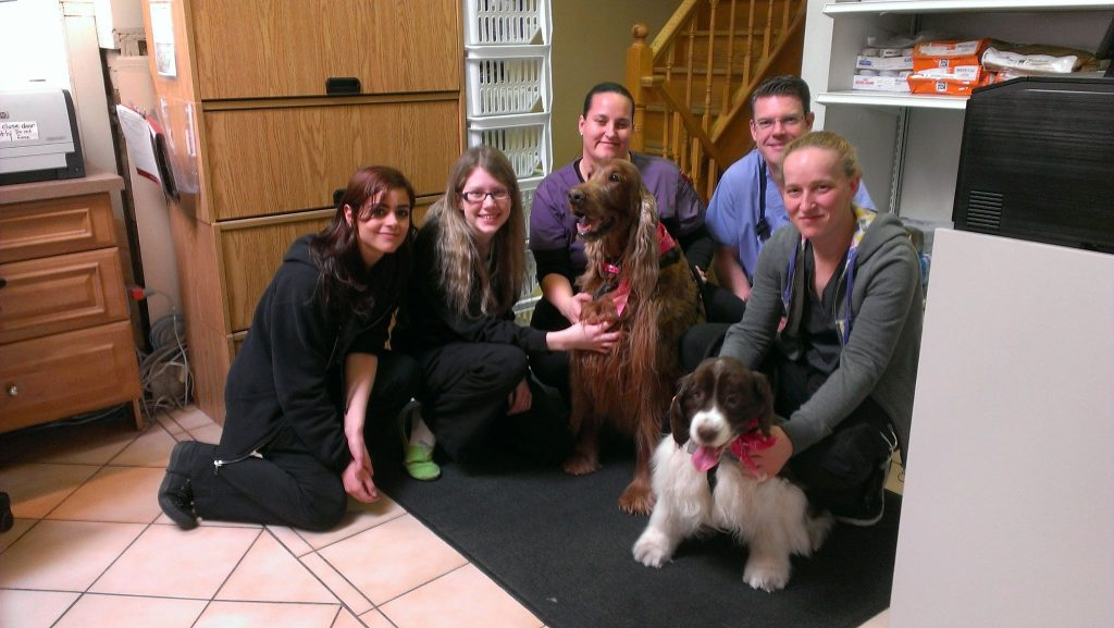 North Town Veterinary Hospital team with senior dogs