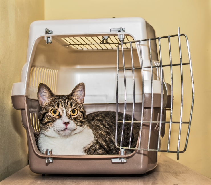 Cat in a crate