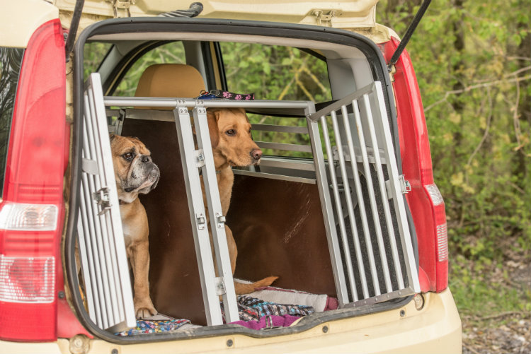 travelling-with-pets
